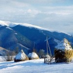 iarna-rogojel-_lm-033