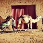 Luci d'Autunno in Marocco 2019
