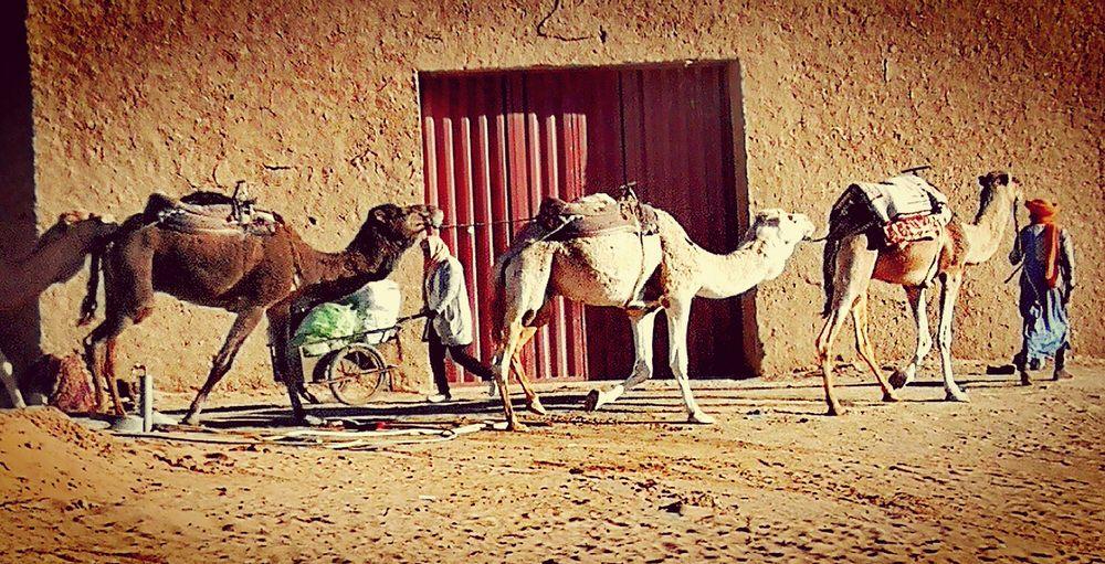 luci marocco