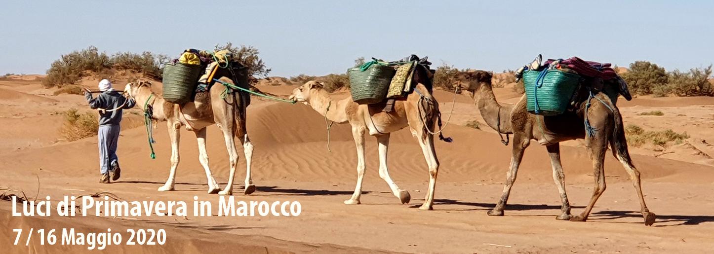 Luci di Primavera in Marocco <br> 7/16 Maggio 2020
